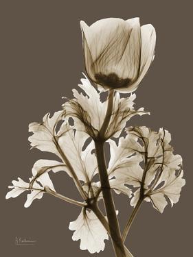 Tonal Anemone by Albert Koetsier