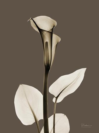 Tonal Calla Lily by Albert Koetsier