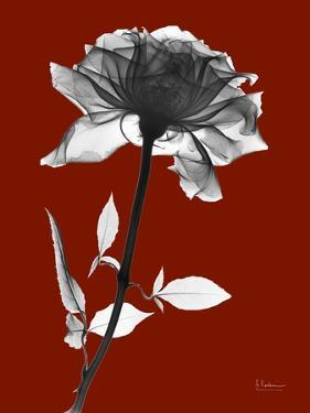Tonal Rose on Crimson by Albert Koetsier