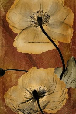 Topaze Opus Iceland Poppy by Albert Koetsier