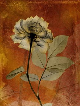 Topaze Opus Rose by Albert Koetsier