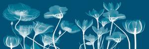 Transparent Flora B by Albert Koetsier