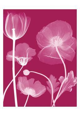 Transparent Flora by Albert Koetsier
