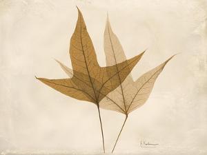 Trident Maple Moments by Albert Koetsier