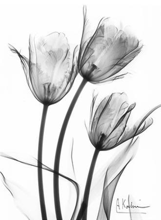 Tulip Arrangement in Black and White by Albert Koetsier