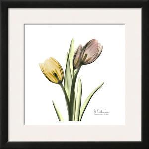 Tulip Bouquet by Albert Koetsier