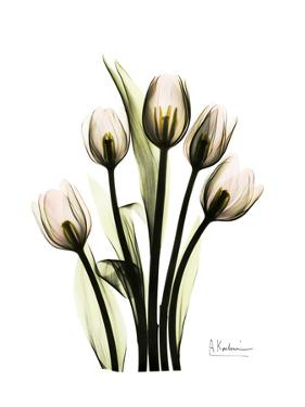 Tulip Family Portrait by Albert Koetsier