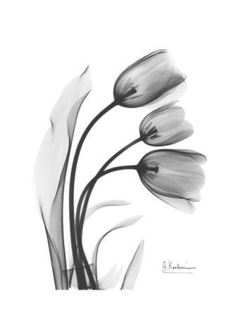 Tulip Gray by Albert Koetsier