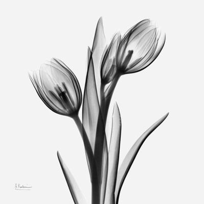 Tulip Greys 2 by Albert Koetsier