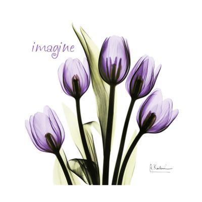 Tulip in Purple, Imagine by Albert Koetsier