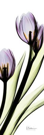 Tulip in Purple by Albert Koetsier