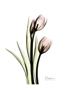 Tulip Portrait by Albert Koetsier