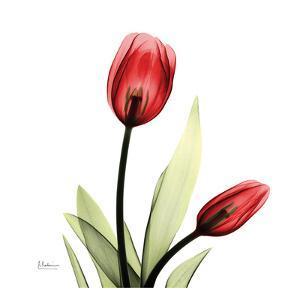 Tulip by Albert Koetsier