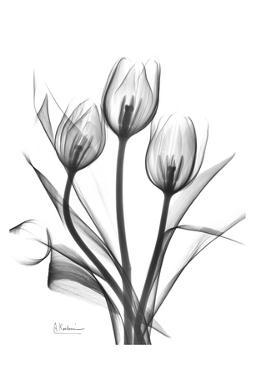Tulips Bunch in Black and White by Albert Koetsier
