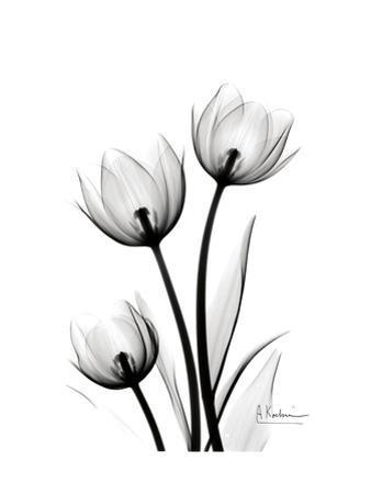 Tulips High Contrast by Albert Koetsier