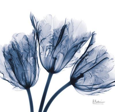 Tulips Indigo by Albert Koetsier