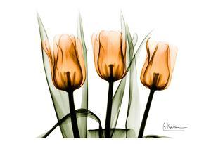 Tulips Orange by Albert Koetsier