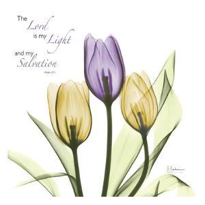 Tulips Salvation by Albert Koetsier