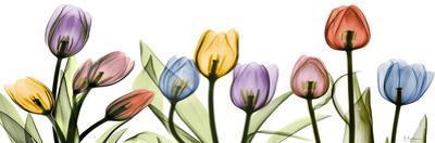 Tulipscape Portrait by Albert Koetsier