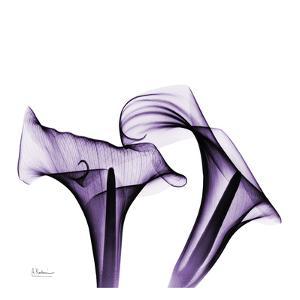 Violet Calla Twins by Albert Koetsier