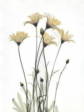 Wild Flowers by Albert Koetsier