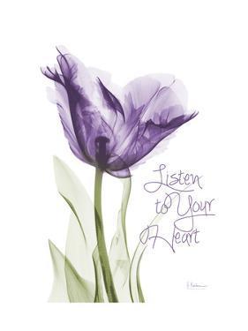 Your Heart Tulip by Albert Koetsier