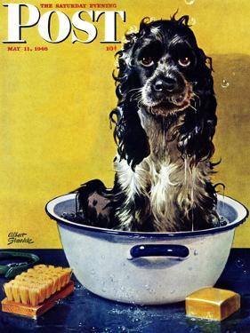 """Butch Gets a Bath,"" Saturday Evening Post Cover, May 11, 1946 by Albert Staehle"