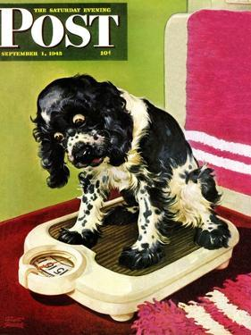 """Butch Weighs In,"" Saturday Evening Post Cover, September 1, 1945 by Albert Staehle"