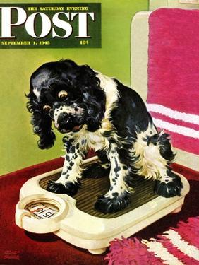 """""""Butch Weighs In,"""" Saturday Evening Post Cover, September 1, 1945 by Albert Staehle"""
