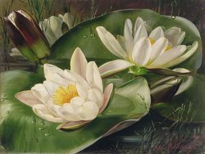 Water Lilies by Albert Williams