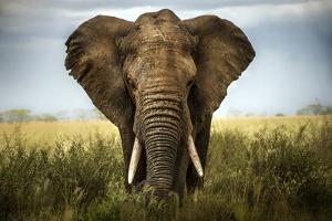 Encounters in Serengeti by Alberto Ghizzi Panizza