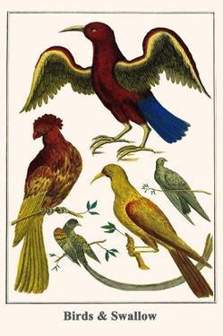 Birds and Swallow by Albertus Seba