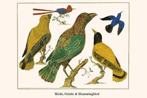 Birds, Oriole and Hummingbird by Albertus Seba