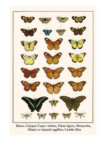 Blues, Calypso Caper Whites, Plain Tigers, Monarchs, Mimic or Danaid Eggflies, Caddis Flies