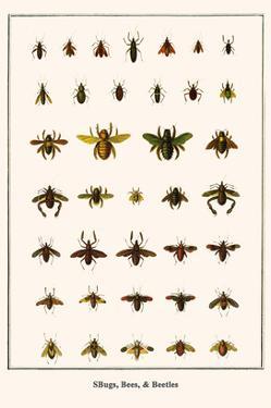 Bugs, Bees, and Beetles by Albertus Seba