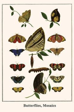 Butterflies, Mosaics by Albertus Seba