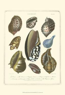 Conchology Collection II by Albertus Seba
