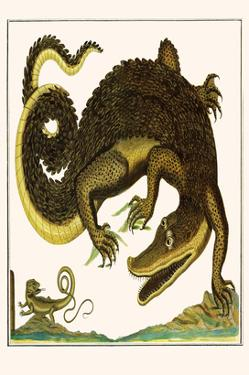 Crocodile and Lizard by Albertus Seba