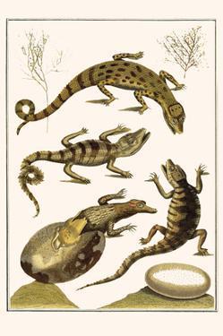 Crocodiles and Plants by Albertus Seba