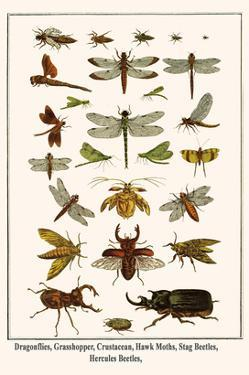 Dragonflies, Grasshopper, Crustacean, Hawk Moths, Stag Beetles, Hercules Beetles, by Albertus Seba