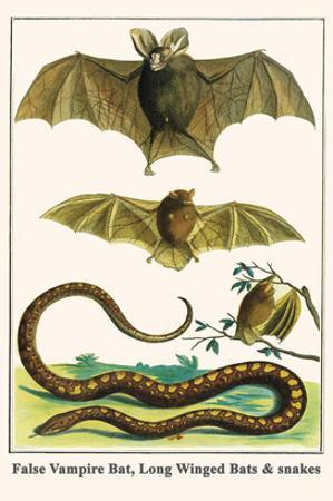 False Vampire Bat, Long Winged Bats and Snakes by Albertus Seba