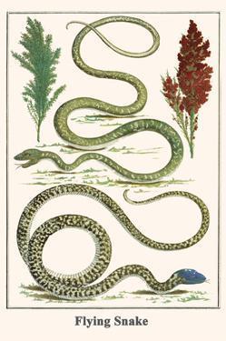 Flying Snake by Albertus Seba