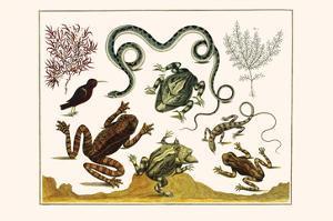 Frogs, Lizards, Snakes, Birds and Plants by Albertus Seba