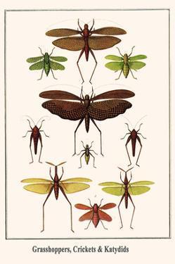 Grasshoppers, Crickets and Katydids by Albertus Seba