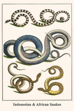 Indonesian and African Snakes by Albertus Seba