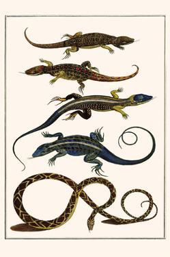Lizards and Snakes by Albertus Seba