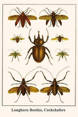 Longhorn Beetles, Cockchafers by Albertus Seba