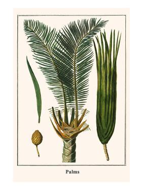 Palms by Albertus Seba