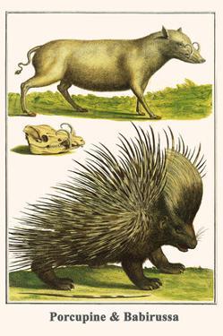 Porcupine and Babirussa by Albertus Seba
