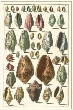 Seba Shell Collection I by Albertus Seba
